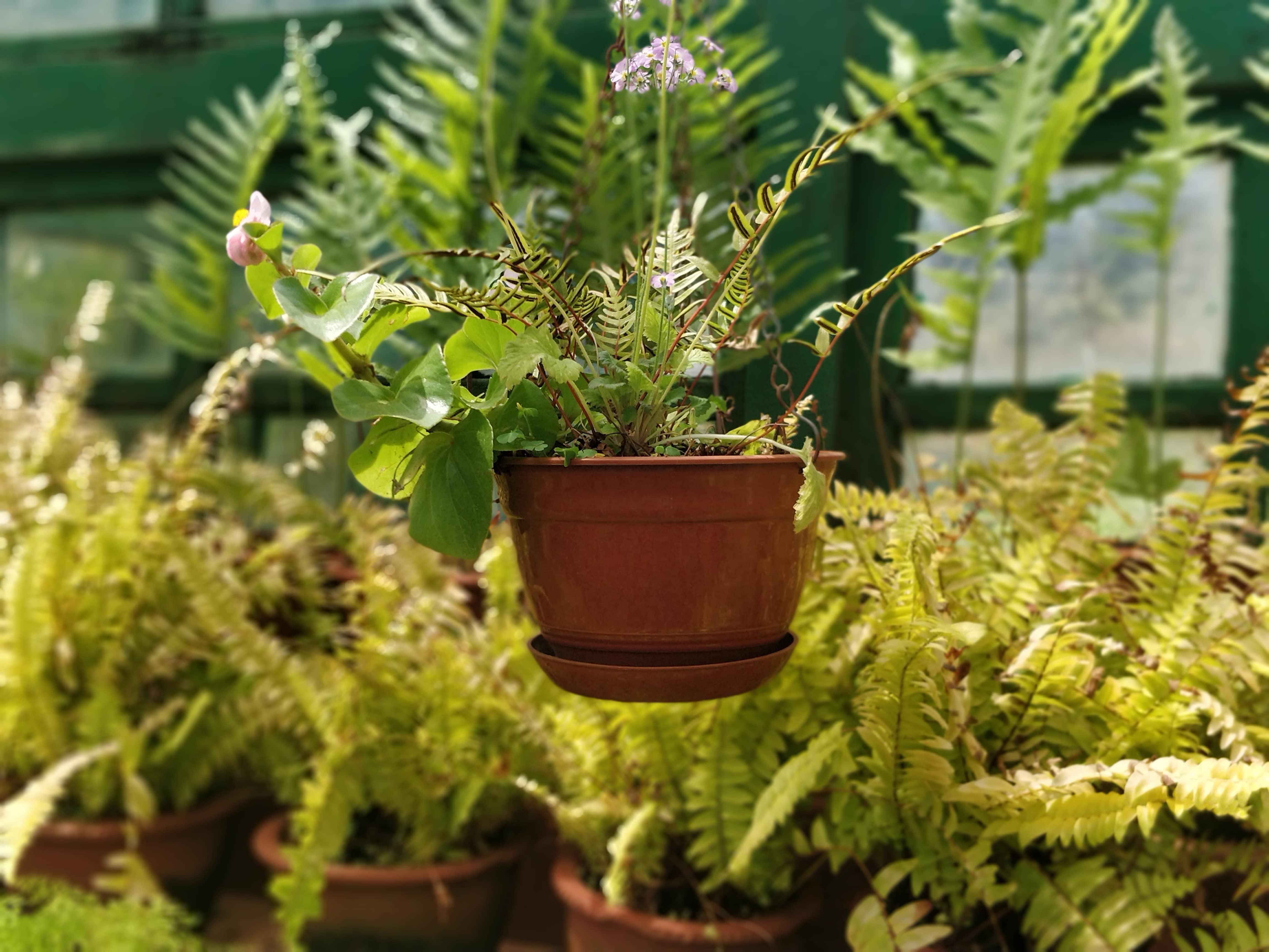 Beautiful Pot in Botanical Garden