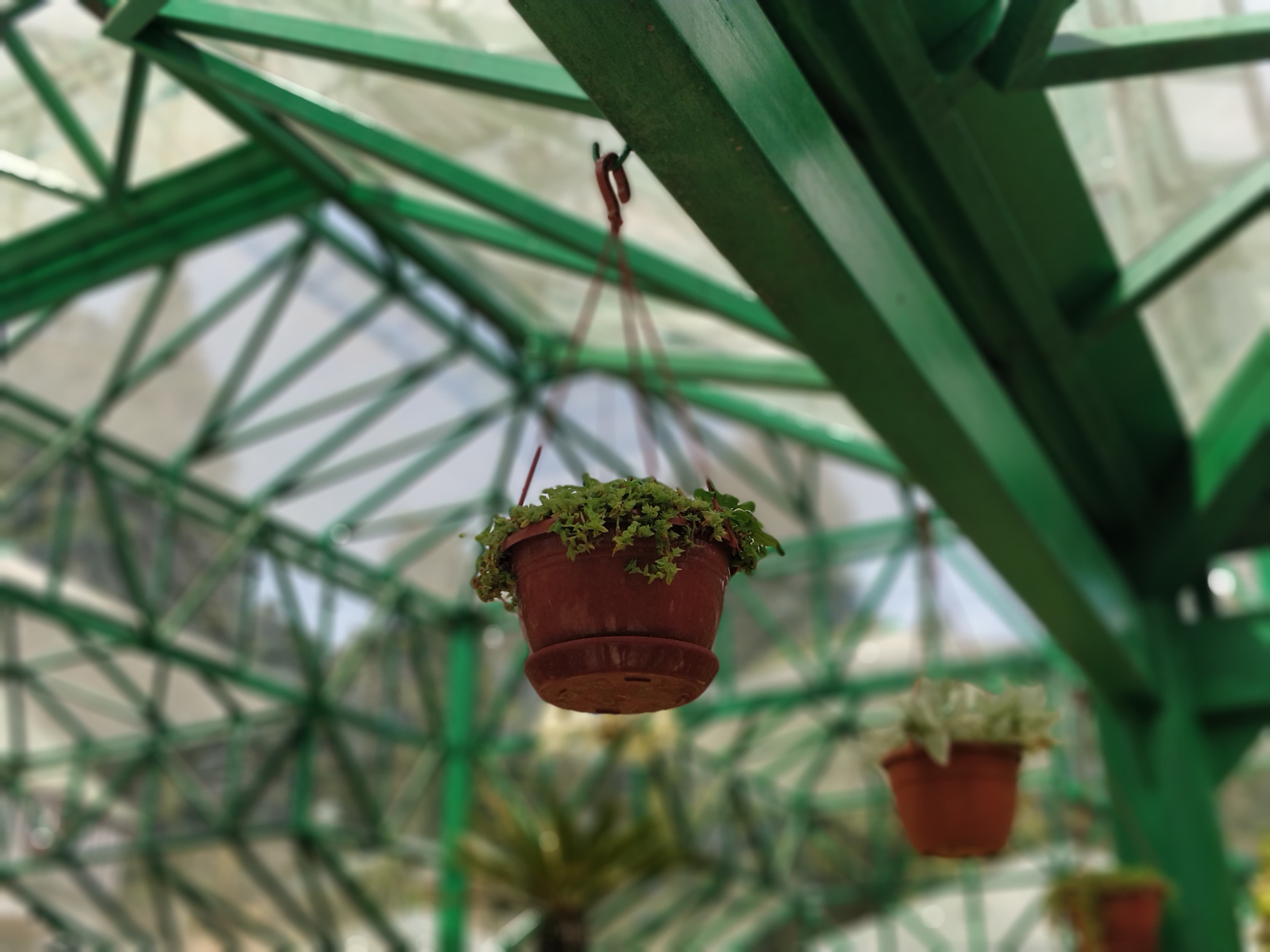 Pot hanged high in Glass House