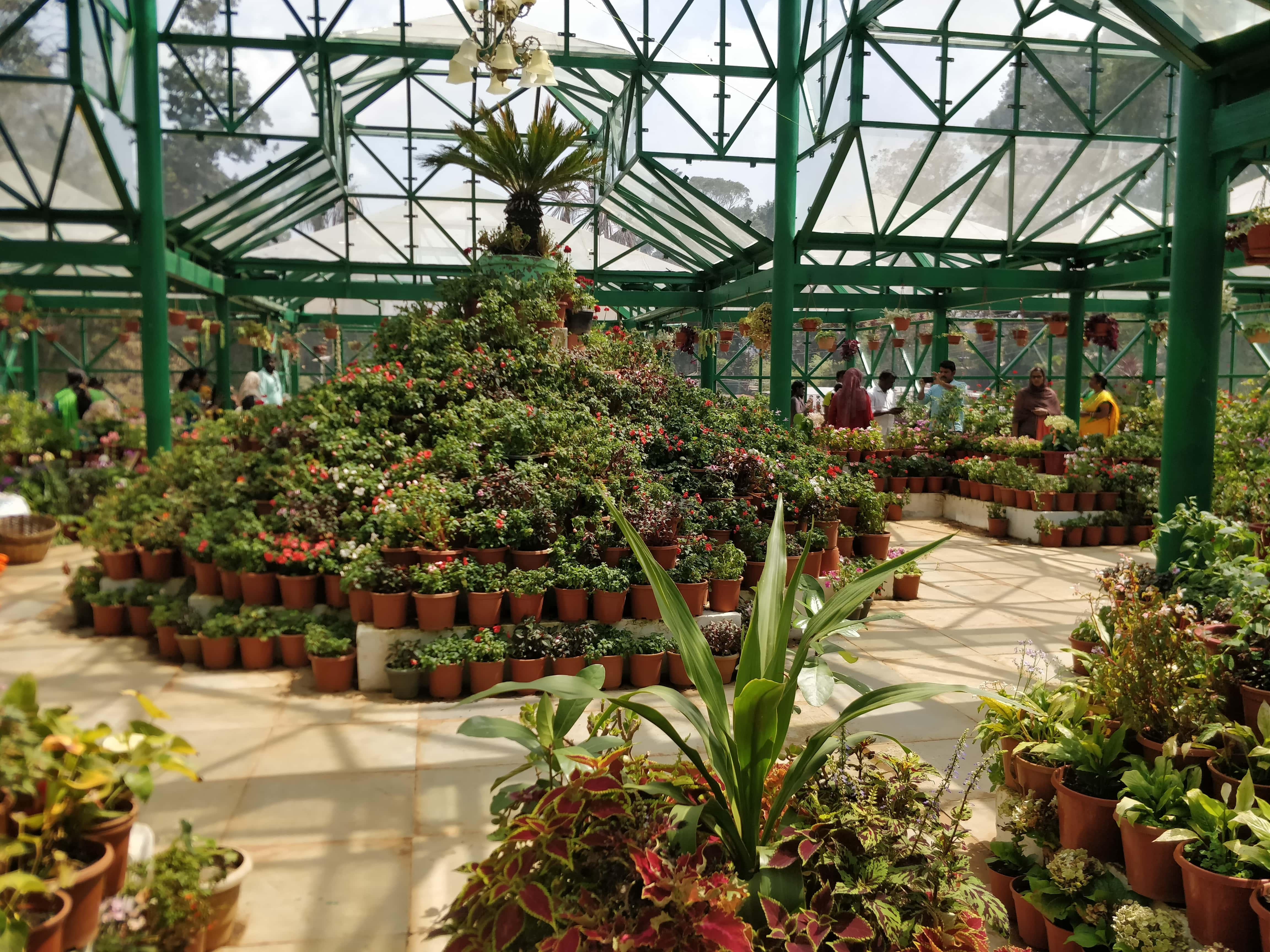 Pot Tree inside Glass House in Government Botanical Gardens Ooty