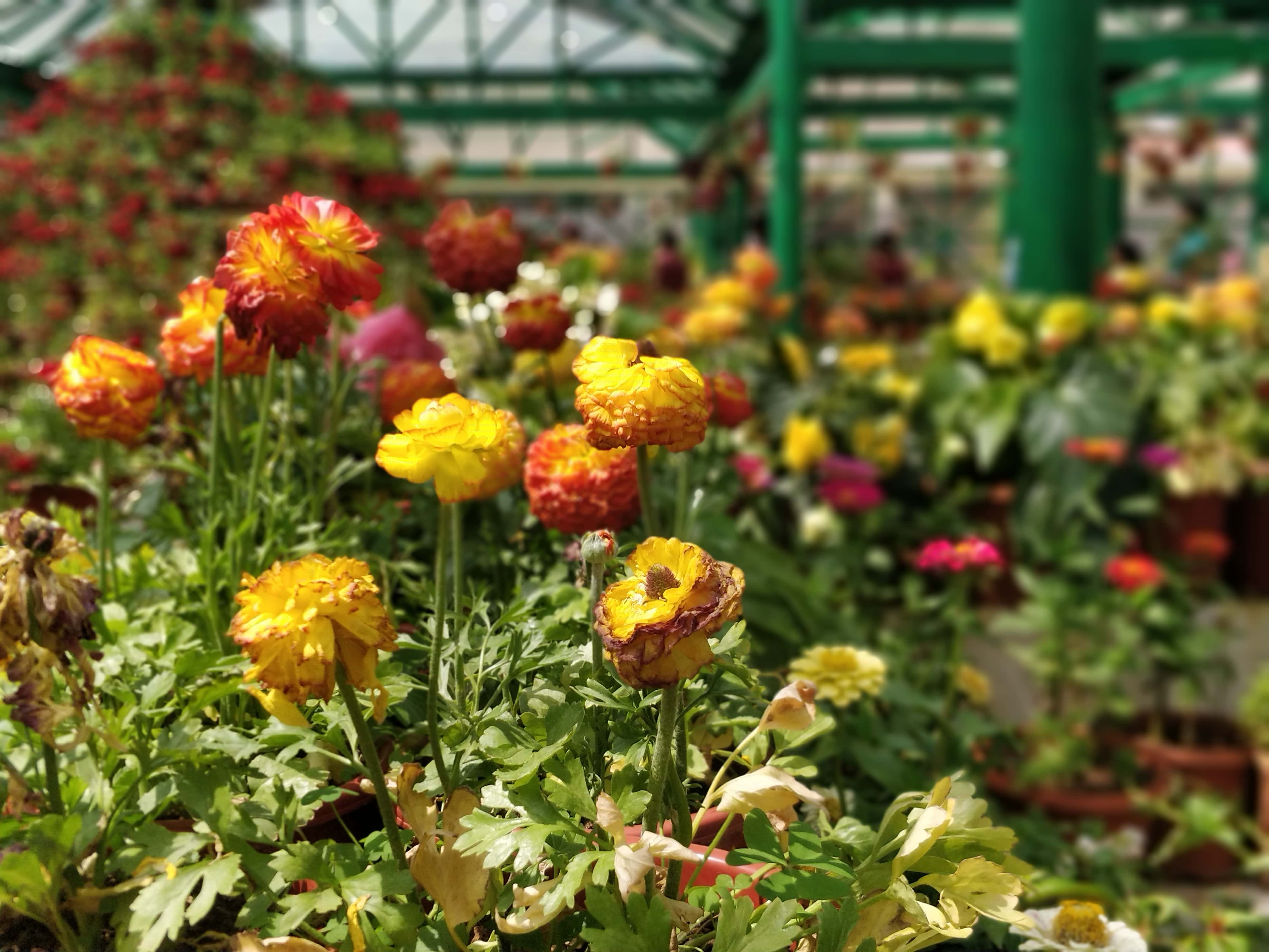 Government Botanical Gardens Ooty