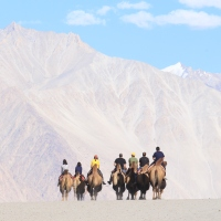 5 Exotic animals and birds of Ladakh
