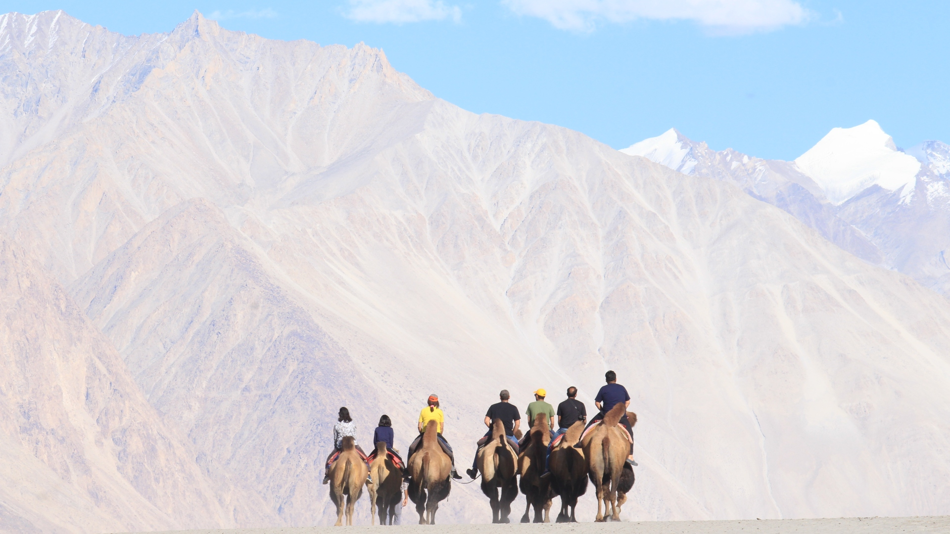 Bactrian camel rides - Famous in Hunder.